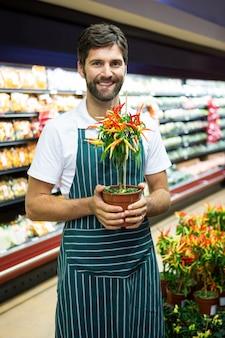 Personal masculino sonriente que sostiene la planta de tiesto en supermercado