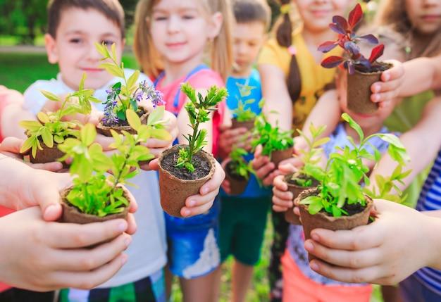 Personas manos ventosas planta nutrición ambiental