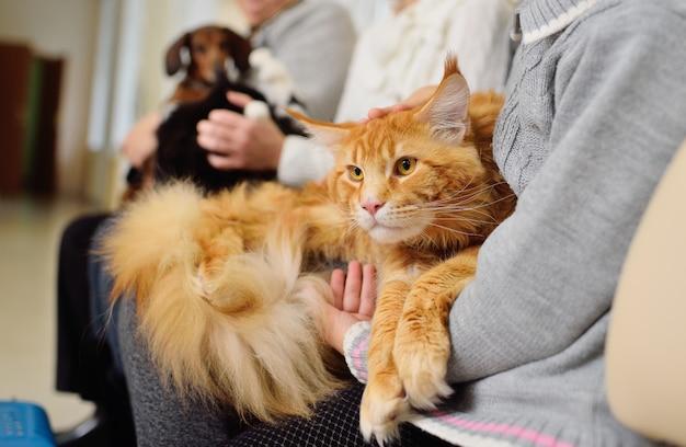 Las personas con mascotas esperan un examen médico.