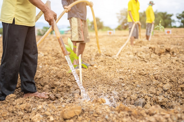 Las personas que plantan el árbol para celebrar el cumpleaños del rey de tailandia