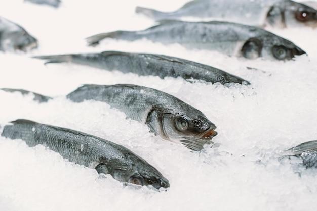 Pescado congelado en hielo en un supermercado. de cerca