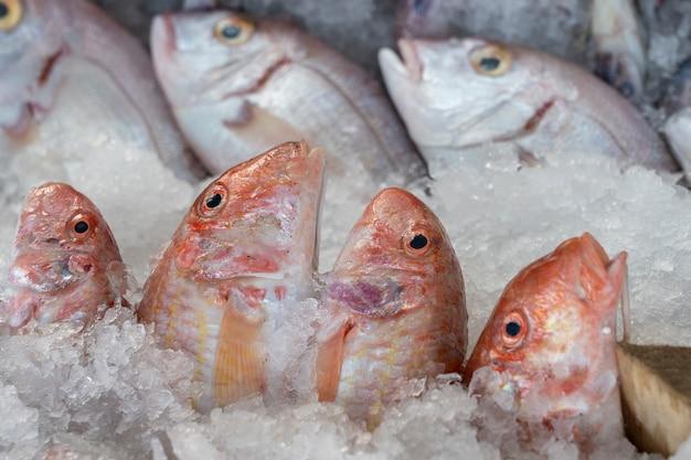 Pescado crudo en hielo para vender en el mercado callejero
