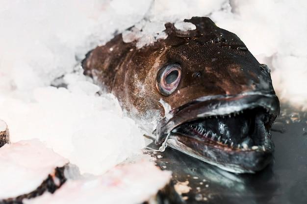 Pescado fresco en cubitos de hielo para la venta en el mercado