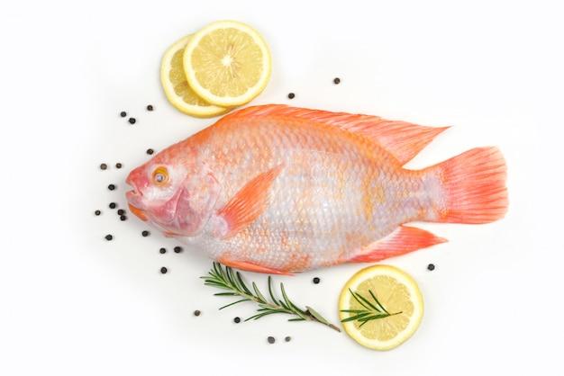 Pescado fresco con hierbas especias romero y limón - pescado crudo tilapia roja aislada sobre fondo blanco