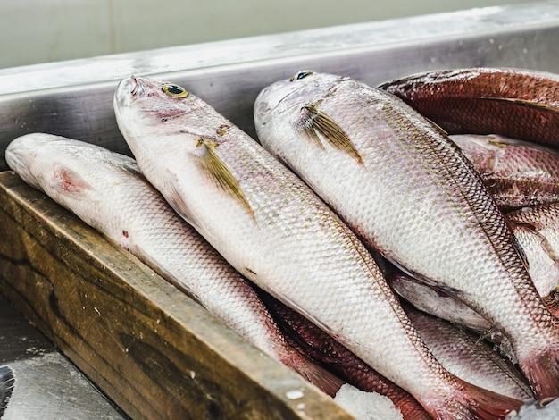 Pescado fresco en el mercado de pescado. de cerca