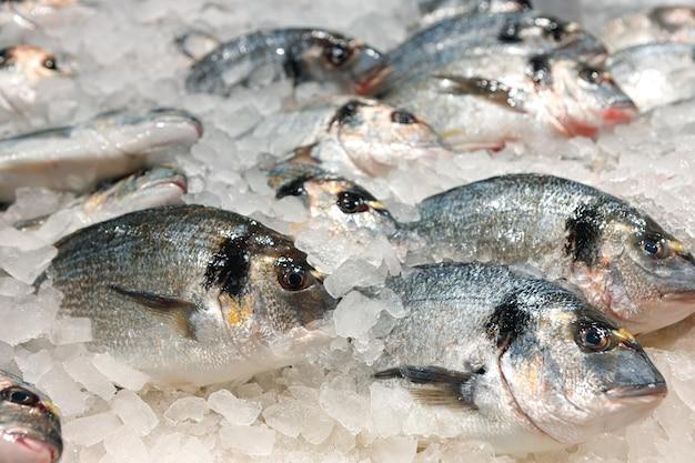 Pescado fresco surtido en mostrador de hielo en el supermercado
