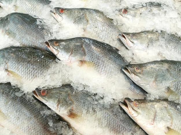 Pescado de perca blanca en el hielo.