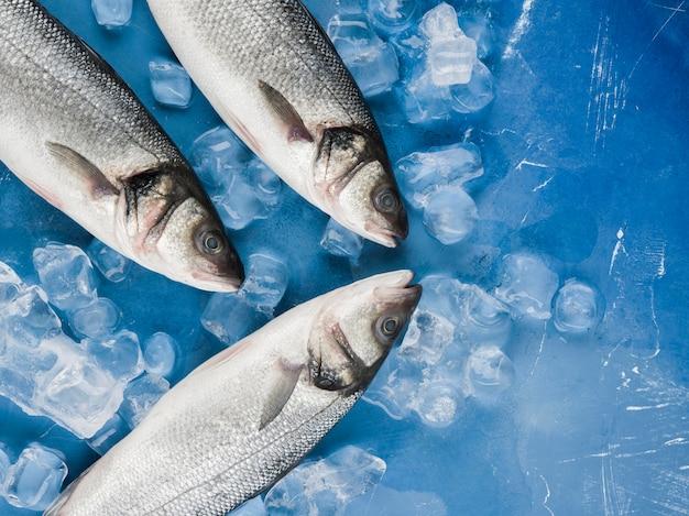 Pescado de vista superior con cubitos de hielo