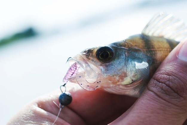 Pescador, tenencia, pez, atrapado, utilizar, artificial, señuelo
