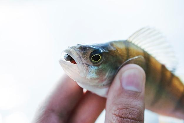 Pescador, tenencia, pez, en, fondo borroso