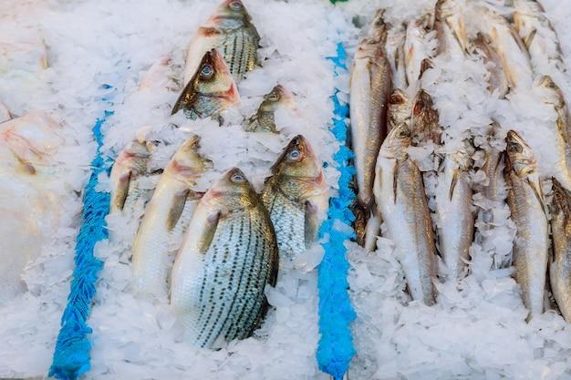 Pescados y mariscos en hielo en el mercado de pescado