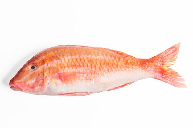 Pescados salmonete rojo aislado en el fondo blanco