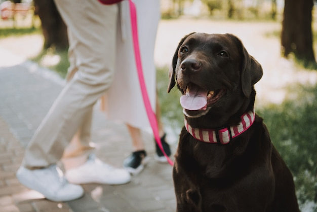 Pet with owners está de pie en green park.
