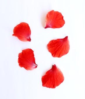 Pétalos de flor de hibisco o flor de hibisco hawaiano rosa china