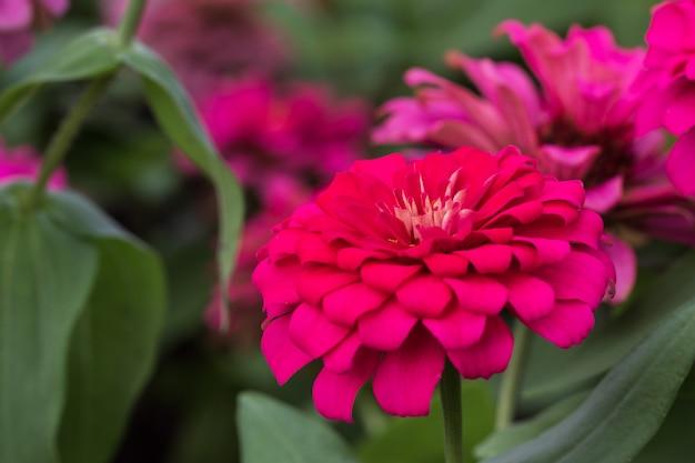 Pétalos de flores de color rosa en múltiples capas