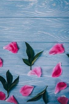 Pétalos de peonía rosa y verde sobre un fondo azul.