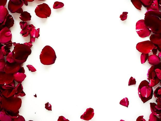 Pétalos de rosa rojos románticos sobre fondo blanco