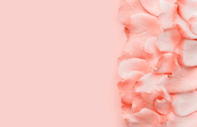 Pétalos de rosa sobre un fondo rosa pastel, estilo minimalista. lay flat, copia espacio.