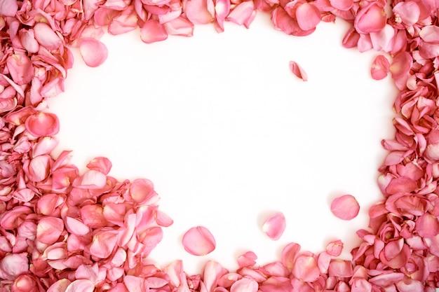 Pétalos de rosas rosas marco sobre fondo blanco.