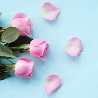 Pétalos de rosas y rosas sobre fondo azul