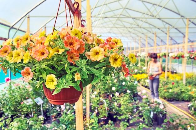 Petunia en maceta colgante y una mujer compradora eligiendo plantas en el fondo