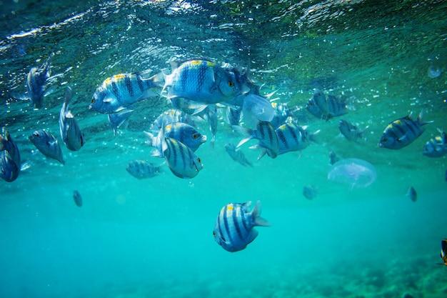 Pez bajo el agua
