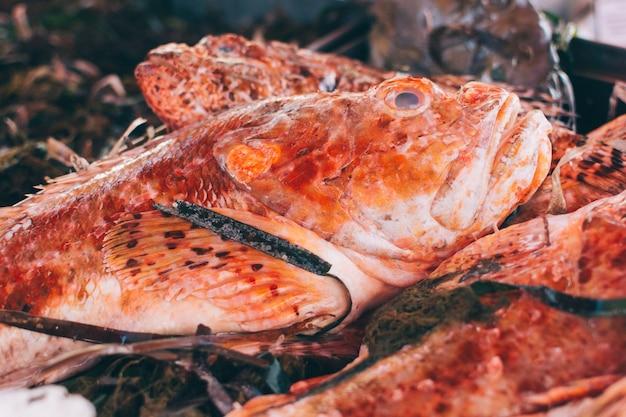 Pez rojo con pastos marinos en el mercado de pescado