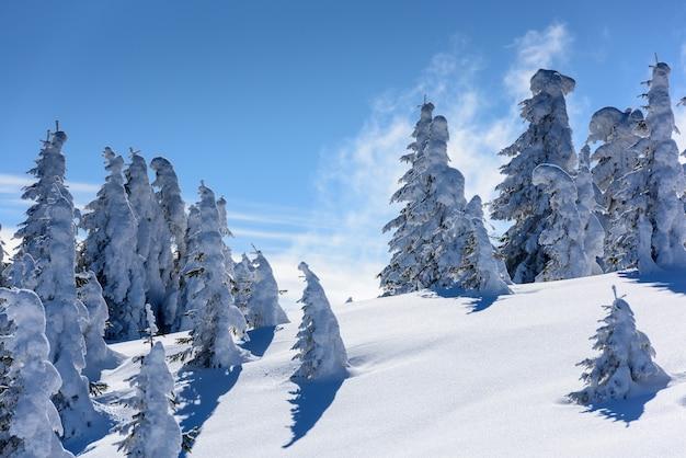 Pico de la montaña con árboles nevados.