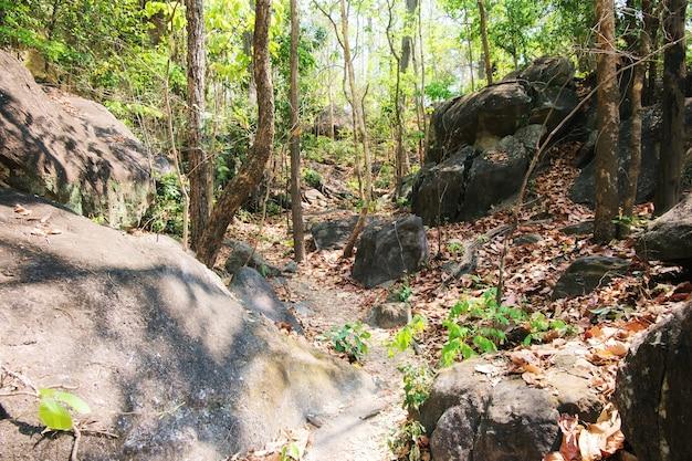 Piedra grande en el bosque, parque nacional de op luang, caliente, chiang mai, tailandia.