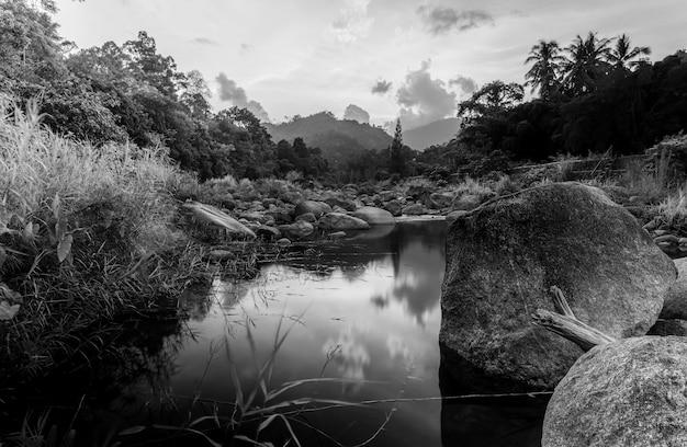 Piedra de río y árbol con cielo y nube de colores, río de piedra y hoja de árbol en bosque, estilo blanco y negro y monocromo
