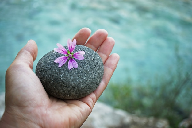 Piedra de río en mano con flor de malva