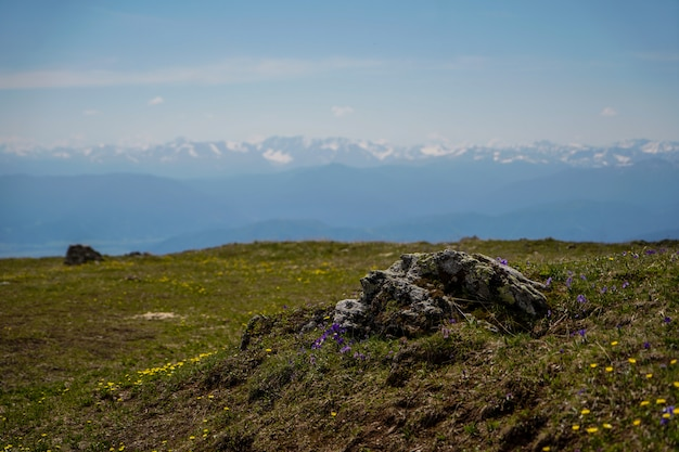 Piedra solitaria crecida con musgo