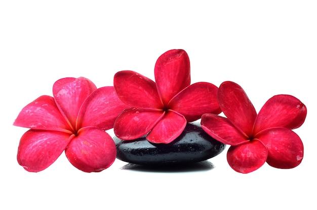 Piedras zen con flor de frangipani
