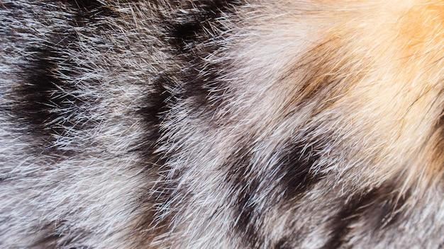 Piel de gato colorida
