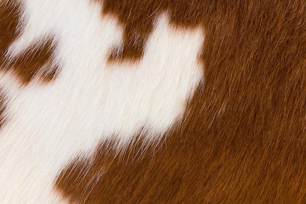 Piel de vaca marrón y blanca