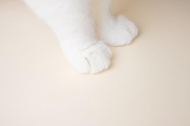 Piernas de gato blanco de cerca. el concepto de mascotas, cuidado de animales, medicina veterinaria.