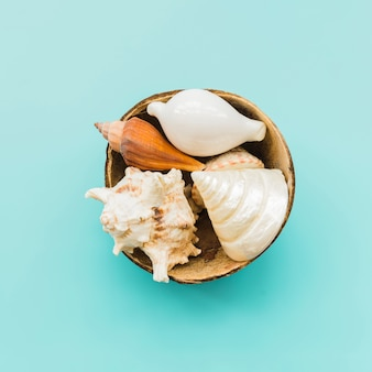 Pila de conchas en cáscara de coco