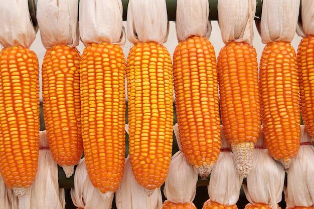 Pila de maíz crudo decorado en finca rural de tailandia