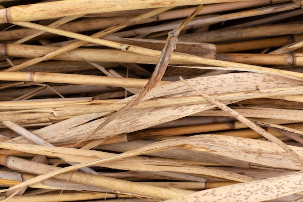 Pila de tallos de caña seca