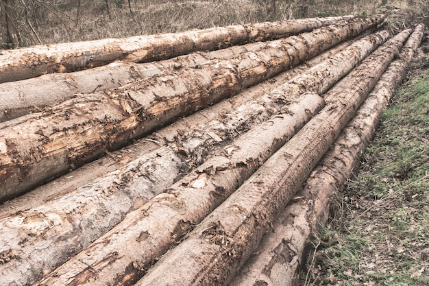 Pila de troncos de árboles en un bosque - concepto de deforestación