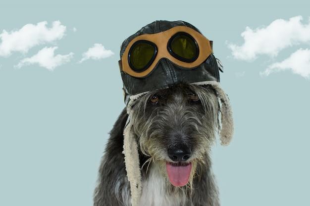 Piloto de perro. llevar un sombrero de aviador con gafas de sol.