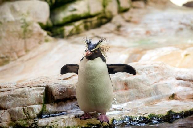 Pingüino en el zoológico por valor de piedras