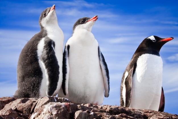 Pingüinos descansando en la antártida