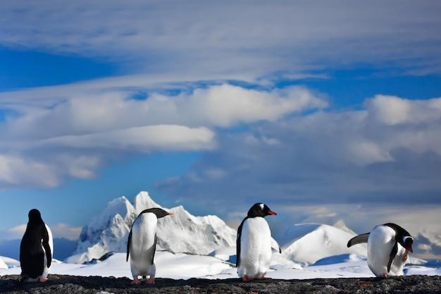 Pingüinos soñando
