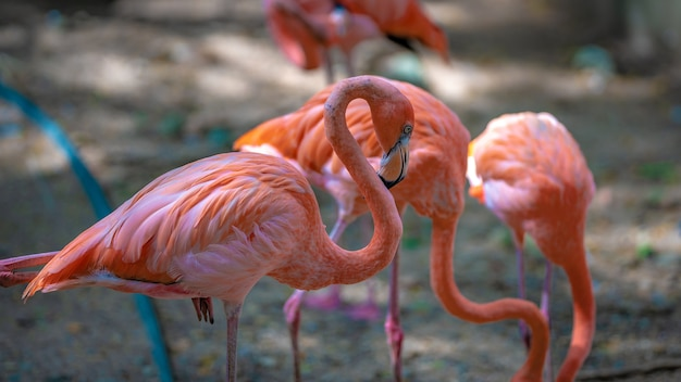 Pink flamingo wildlife