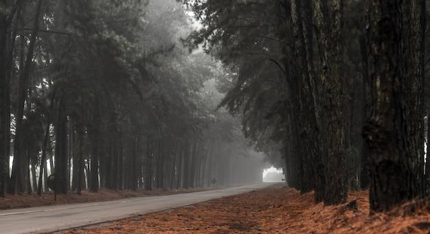 Pino árbol niebla carretera hermosa escena