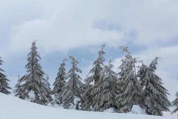 Pintoresco bosque nevado en temporada de invierno. bueno para el fondo de navidad.