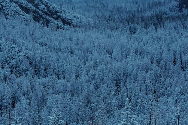 Pintoresco bosque nevado en temporada de invierno.