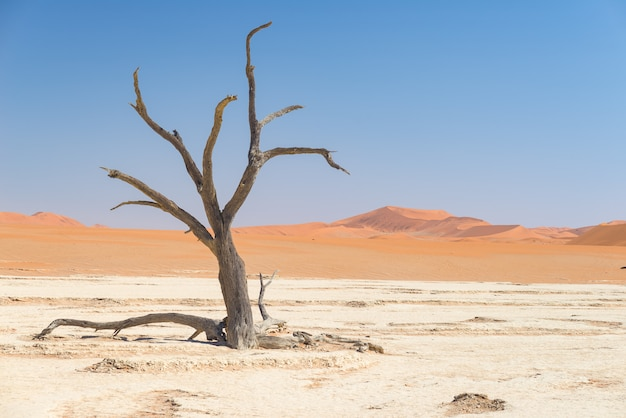 Los pintorescos sossusvlei y deadvlei, arcilla y salinas con árboles de acacia trenzados rodeados de majestuosas dunas de arena.