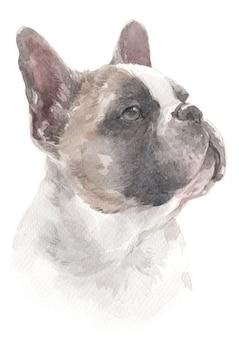 Pintura de acuarela de bulldog francés.